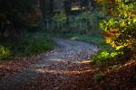 Road to November by CedaCo