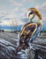 Barn Owl, February Sunrise by benke33