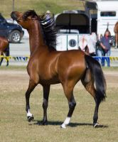STOCK - Gold Coast Show 077 by fillyrox