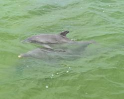 Mother and Baby Dolphin 3 by Lauren-Lee