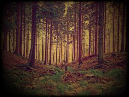 Forest Poetry 8 by vigrid88