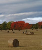 Autumn bales by piglet365