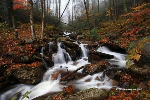 GSMNP Autumn 5 by TRBPhotographyLLC
