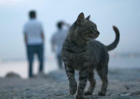 stray in istanbul by abdulicart
