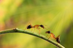 Ants by Hussain-AlMousa