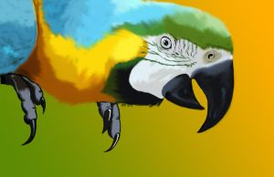 Macaw by TheSleeperAwakes