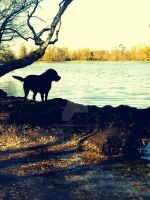 The Dog and the Lake by FluffyCloudsOfSheep