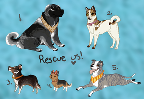Rescue Dog Adoptables 7 :TAKEN: by Kultapossu