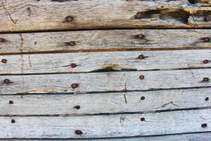 Old Wood and Bolts Texture 2 by Digimaree