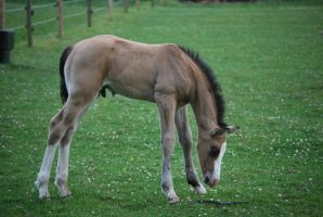 Foal Stock 15 by equinestudios