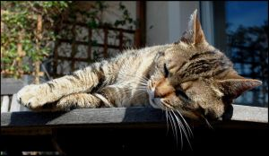 Chipie, sleeping at the sun... by Flo0orian