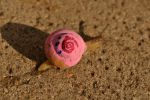 Gary the Snail by line-up