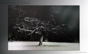 Isolated Tree by goor
