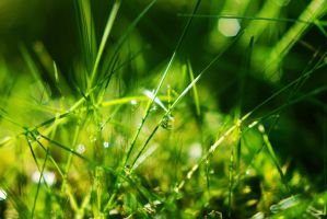Grass Drops by BlueColoursOfNature