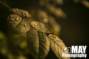 Morning droplets by Askingtoattackmeghan
