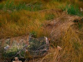 Grass 5 by Pistol-Whipped-Sar