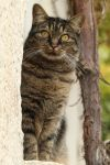 Cat Stock 119 by Malleni-Stock