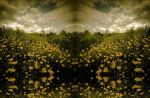 buttercup field inverted by christinemarie33