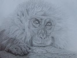 Japanese Macaque Monkey by Cosmic-Cherry-Tree