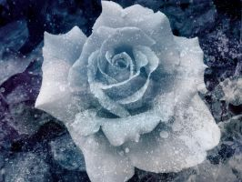 Ice Rose by badfinger