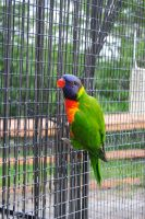 Zoo 9 Rainbow Lorikeet by PirateLotus-Stock