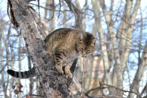Cat - 6 by Silver-Stock-Images