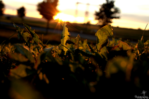 001 Sunset '12 - where the hawkbit touches the sun by RvS-RiverineStables