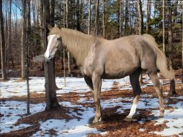 Frosty Multibreed by Soppinaro