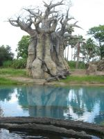 Weird Baobab Tree 2 by GreenEyezz-stock