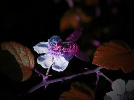 NEON NATURE ( THE BLUEBERRY BUG ) by ANDYBURGESS