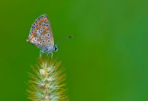 Butterfly 5 by sakaoglu