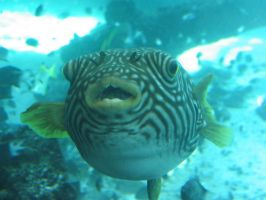 The Mindless Blowfish by afira