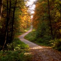 Autumn Paths 2 by Legends-Stock