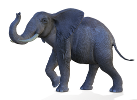 Elephant 3 PNG by Variety-Stock