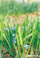 tiny flowers and some grass by TuNages