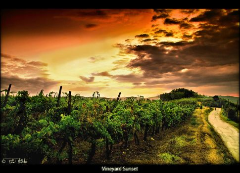 Vineyard Sunset by Marcello-Paoli