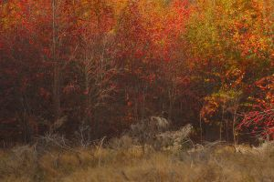 Shades of Autumn by octane2