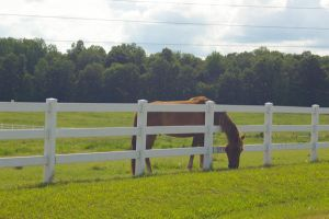 The Grass Is Always Greener by PatGoltz