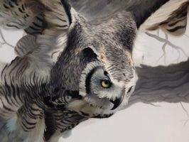 Great Horned Wood Owl (Close up 1) by Cookiee1991