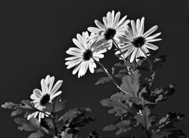 004 27bw by Placi1