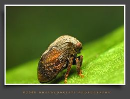 bugs11 by dhead