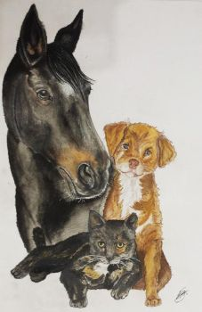 Three pets by alvija
