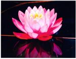 Lotus Flower by tionnahemcrae