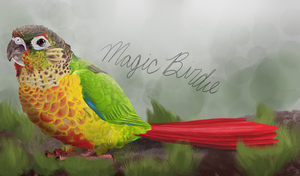 Conure! by MagicBirdie