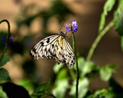 Butterfly Safari II 4 by SopChoppy