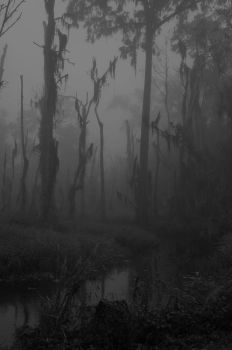 The Swamp by reckinyards