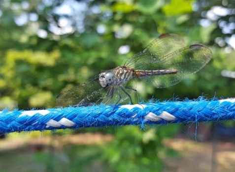 Dragonfly on the Clothesline 2 by ArjaySKing