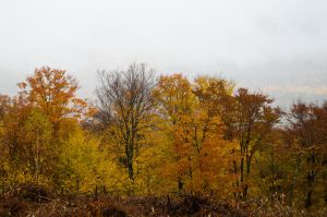 White Mountains  Fall Foliage  002 by FairieGoodMother