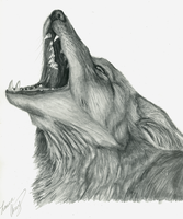 Howling Coyote by MorRokko