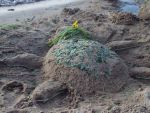 Sand Turtle - 02 by Teeter-Echidna